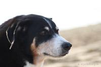 Appenzeller Hundeglück