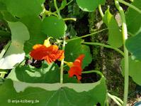 Leckereien aus dem Gemüsebeet