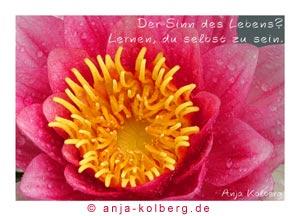 Postkarte 06023 aus meinem Webshop