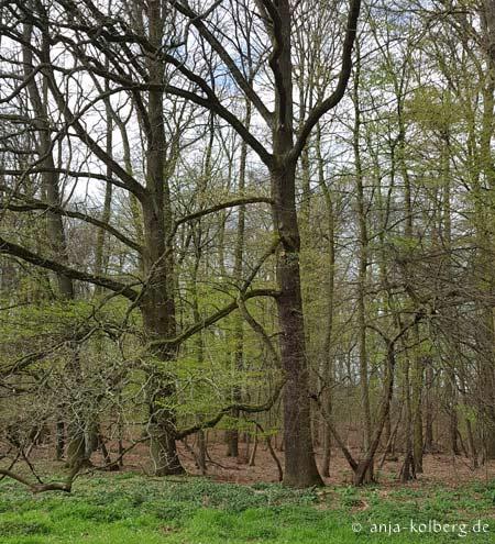 Immer mehr Grün an den Bäumen