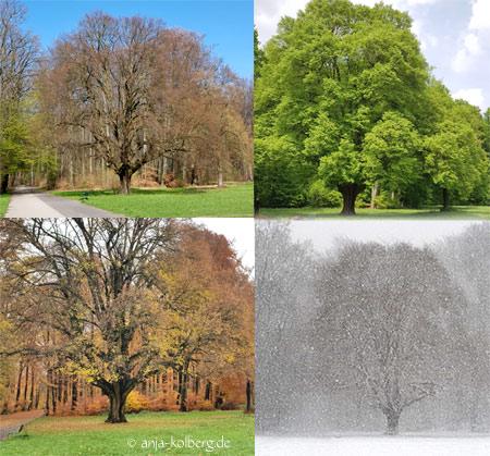 Baum Jahreszeiten