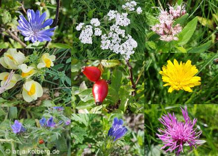 Blüten auf Asnaes