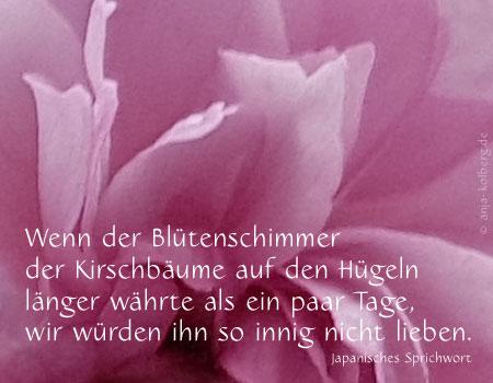 E-Card Kirschblüte