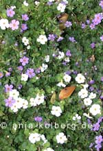 Sommerblumen im November